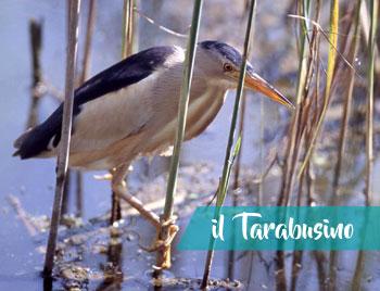 latinamipiace_lago-di-san-puoto_tarabusino