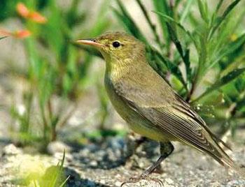 isole-pontine-ventotene_museo-migrazione-e-osservatorio-ornitologico