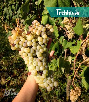 uva-trebbiano-vini-provincia-di-latina-latinamipiace