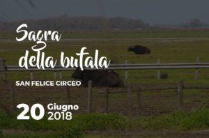 Sagra della bufala San Felice Circeo @ San Felice Circeo | San Felice Circeo | Lazio | Italia