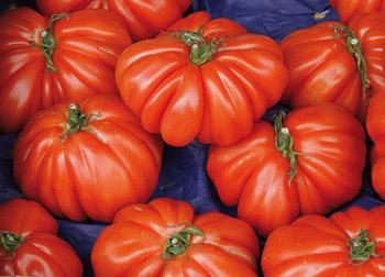 latinamipiace-prodotti-tipici-Pomodoro-Spagnoletta-di-Gaeta-e-Formia